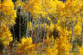 Fall Teton National Forest