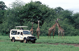 safari vehicle Manyara National Park Tanzania