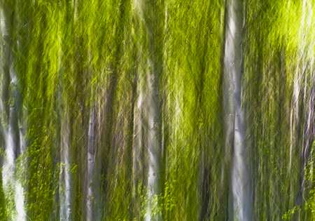 aspen grove abstract landscape image