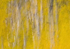 Abstract interpretation Quaking Aspens