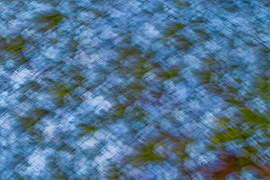 abstract photograph blue florals